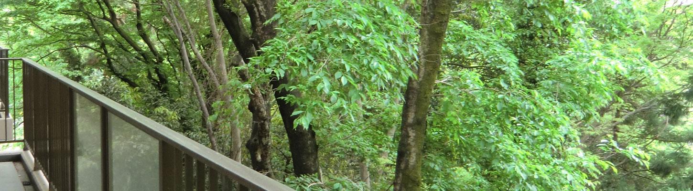 社会福祉法人 喜楽会 | 自然(木々)